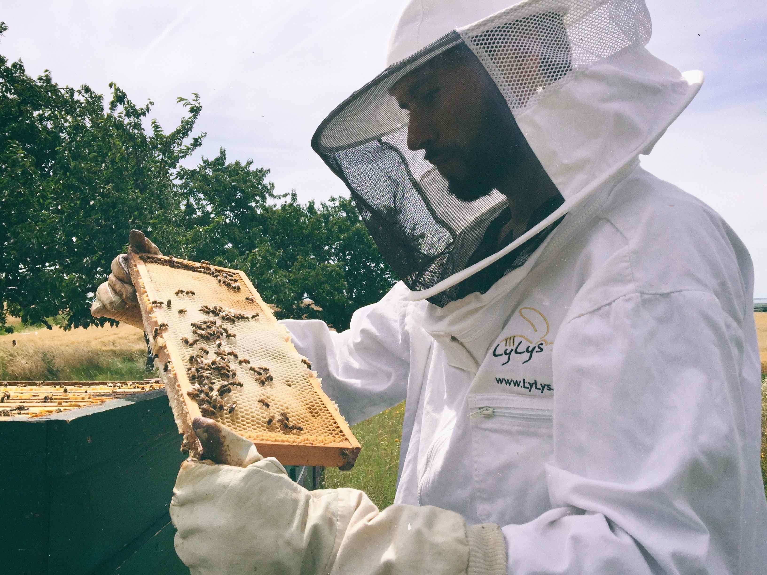 Spende für die Bienen