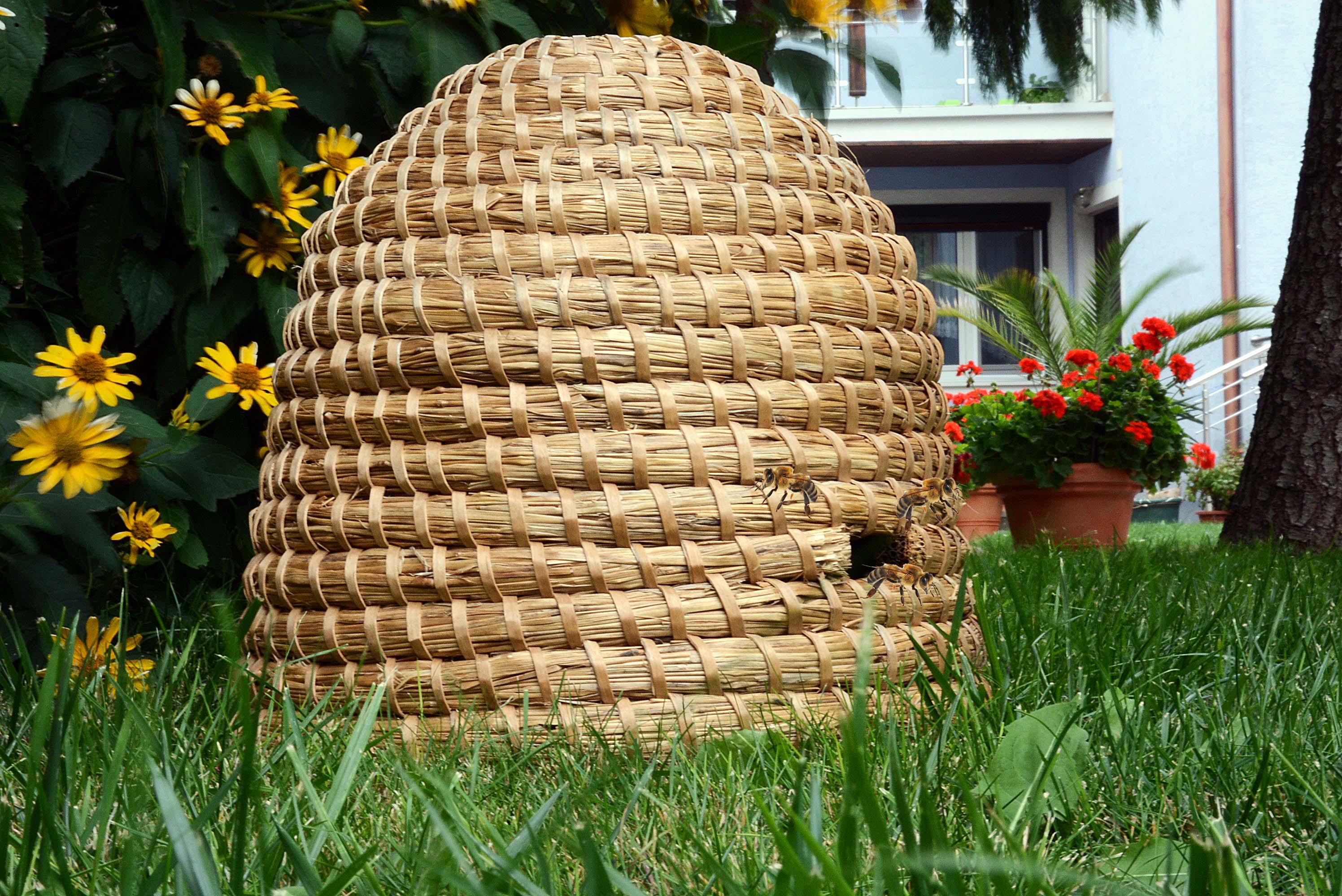 Echtes Bienenvolk für deinen Garten